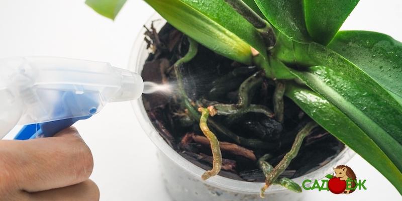 Уход за орхидеей в домашних условиях: что делать нельзя
