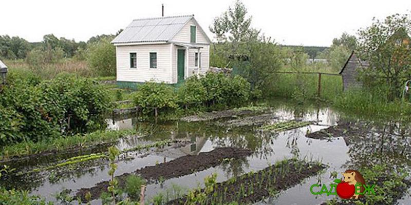 Как решить проблему высоких грунтовых вод на участке