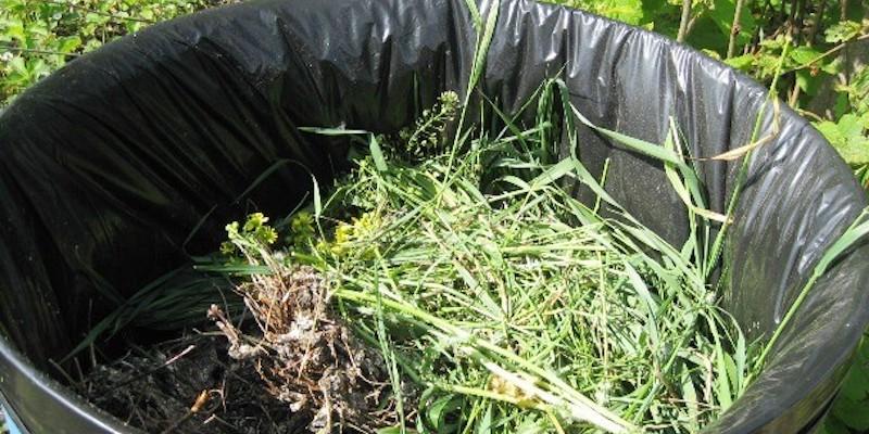 Зеленое удобрение в бочке