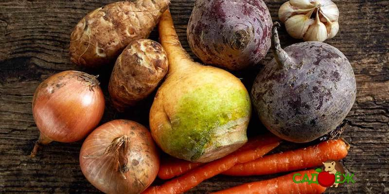 Какие овощи нельзя хранить в погребе