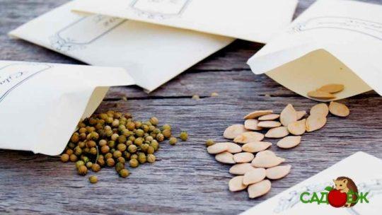 Хранение семян в домашних условиях