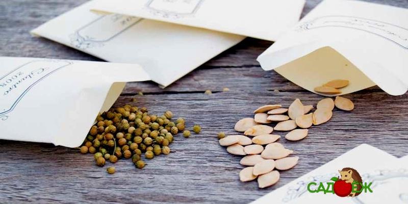 Как и где хранить семена в домашних условиях?