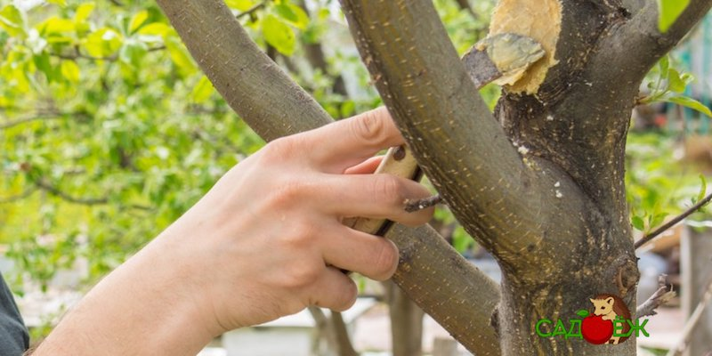 Как приготовить садовый вар своими руками?