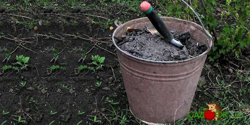 Каким растениям нельзя золу?