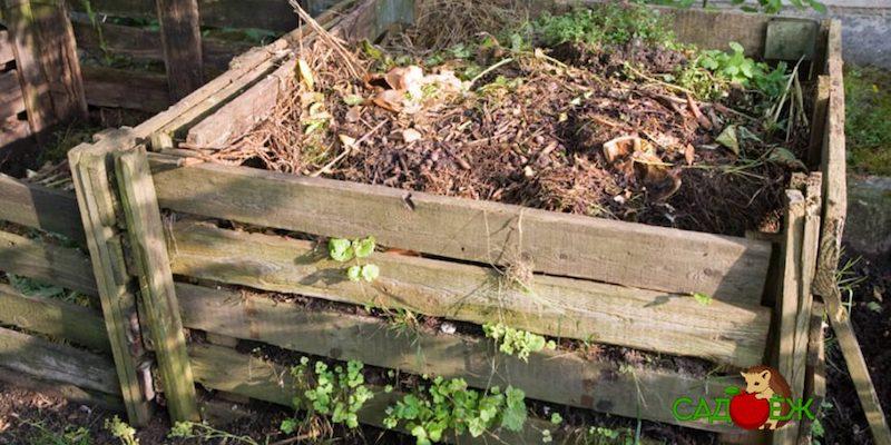 Что сделать, чтобы компост созрел быстрее?