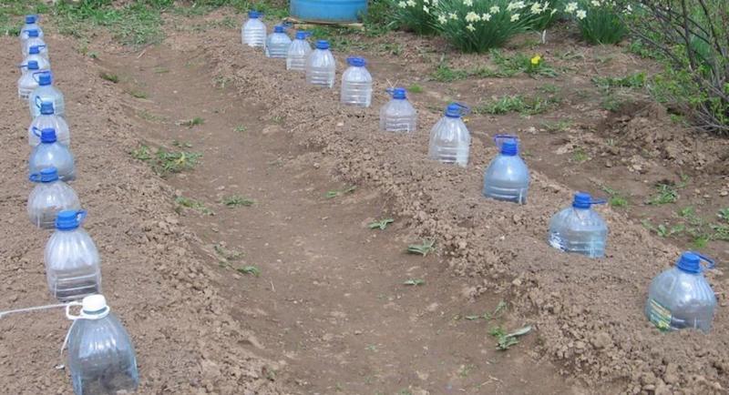 Мини-теплички из пластиковых бутылок
