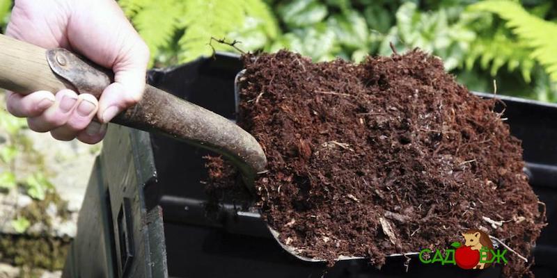 В чем вред навоза для огорода?