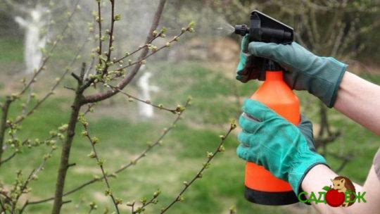 Обработка деревьев от вредителей осенью