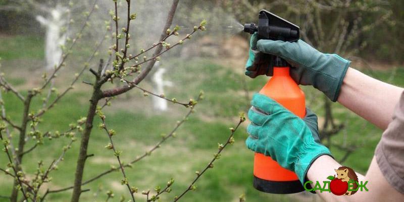 2 универсальных средства для обработки деревьев от вредителей