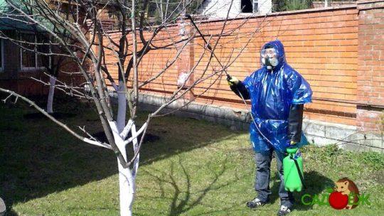 Обработка сада соляркой весной