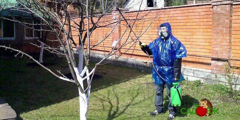 Обработка сада соляркой от вредителей и болезней весной