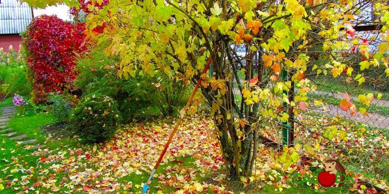 Что нельзя делать в огороде осенью?