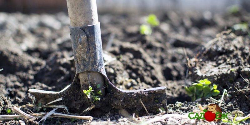 Нужно ли перекапывать огород осенью?
