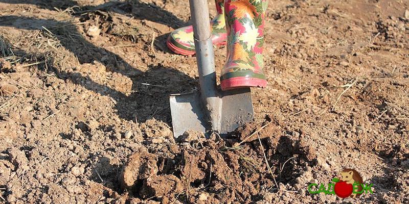 Нужно ли перекапывать землю в огороде весной?