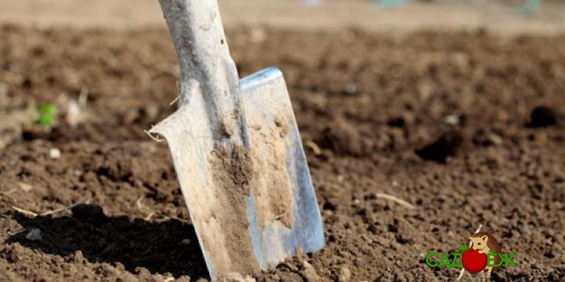 Как правильно перекопать огород осенью?