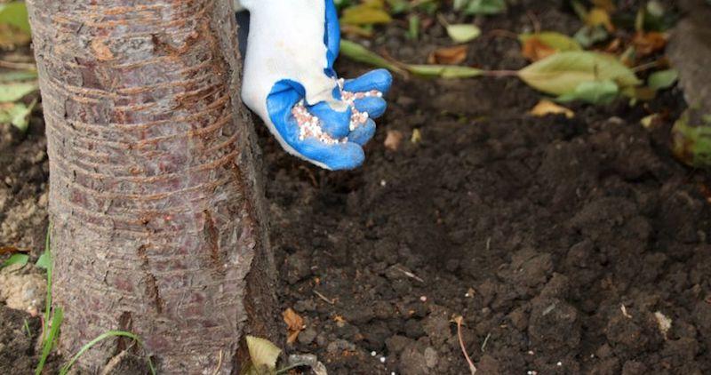 Подкормка деревьев минеральными удобрениями