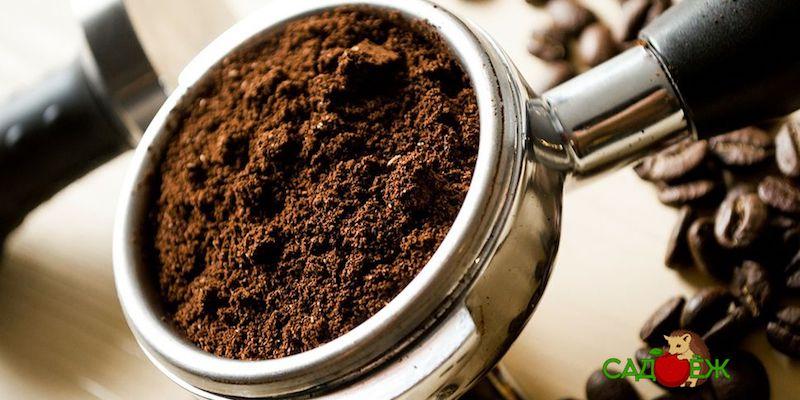 Как использовать спитой кофе на огороде?