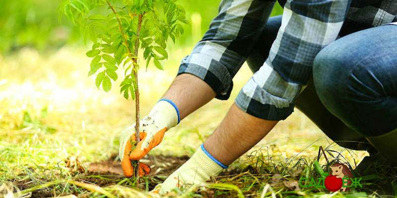 Как подготовить яму для посадки плодовых деревьев?