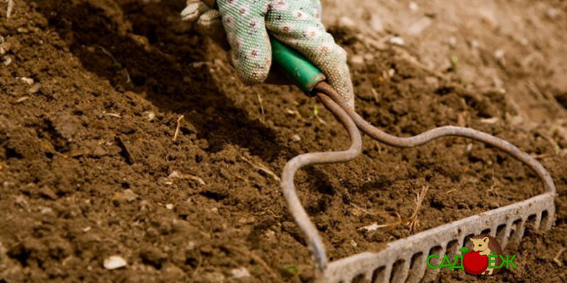 Раскисление почвы известью осенью