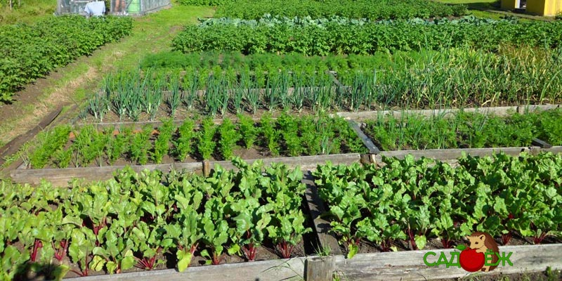 Три основные правила севооборота в огороде