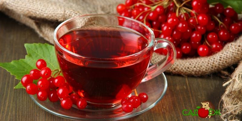 Полезные свойства сока калины и как его принимать