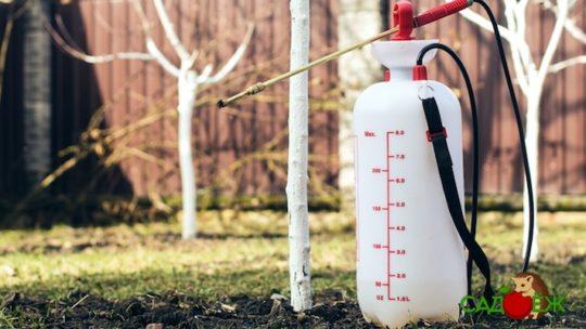 Обработка деревьев от вредителей и болезней весной