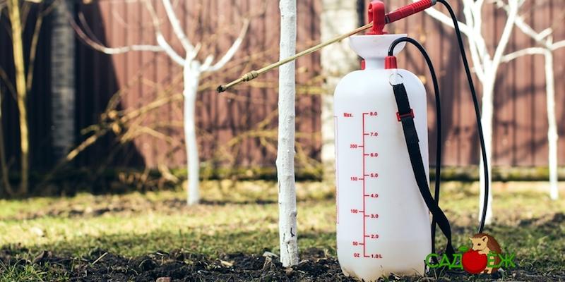 Обработка сада от болезней и вредителей весной