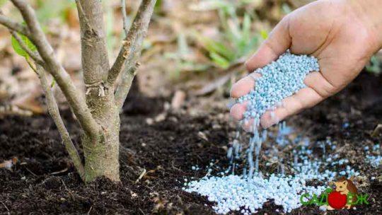 Фосфорные удобрения для растений в огороде