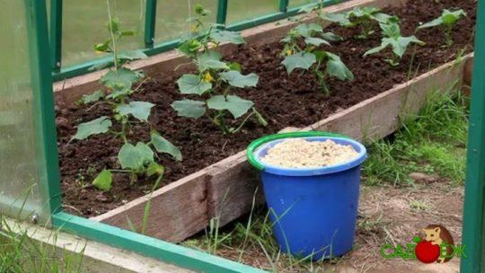 Вред использования опилок в огороде