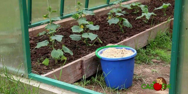 Вред опилок для почвы и огорода и как его нейтрализовать?