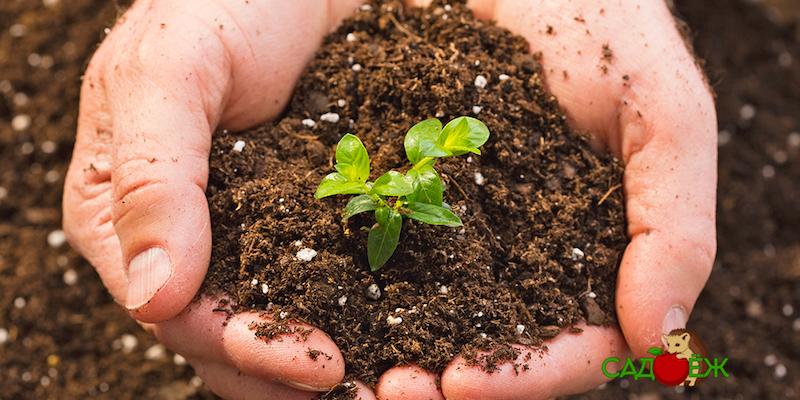 Определение кислотности почвы с помощью уксуса