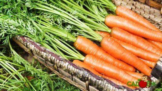 Как сохранить морковь свежей на зиму