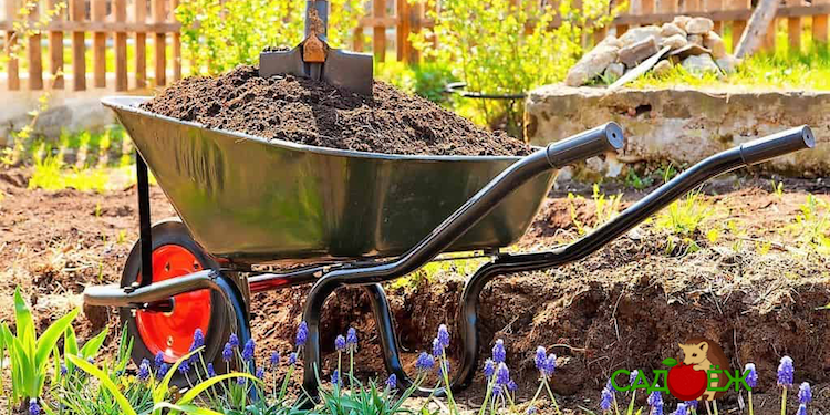 Какой навоз лучше для огорода?