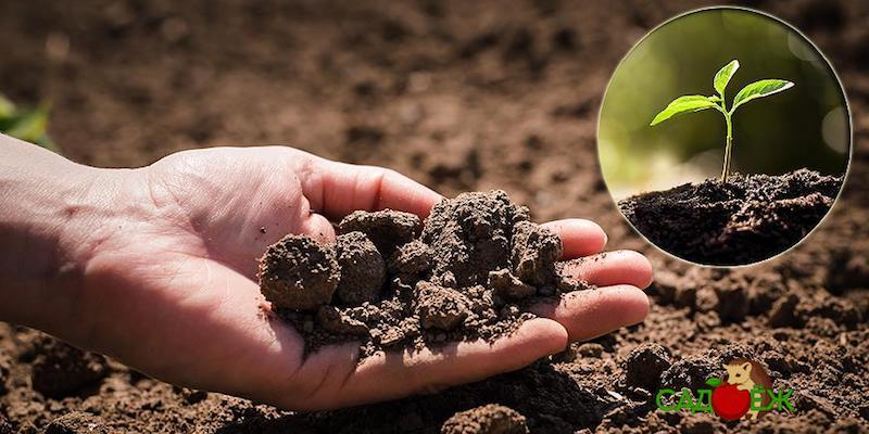 Как определить кислотность почвы с помощью смородинового листа?