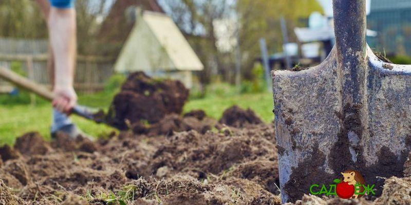 Как правильно перекапывать огород осенью?