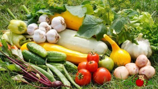 Польза овощей с огорода