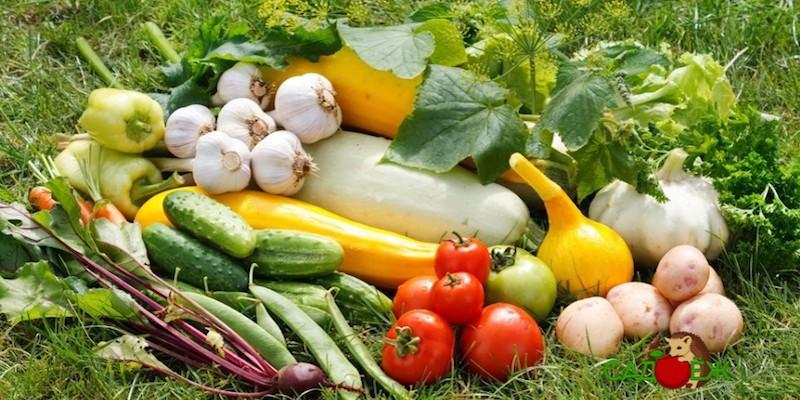 Какие овощи с огорода самые полезные?