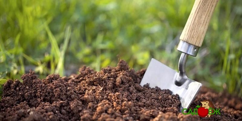 Эффективные мероприятия по повышению плодородия почвы
