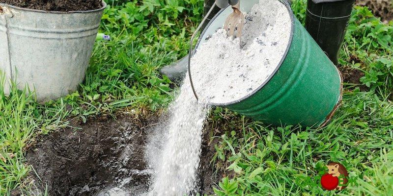 Как и чем раскислить почву на огороде?