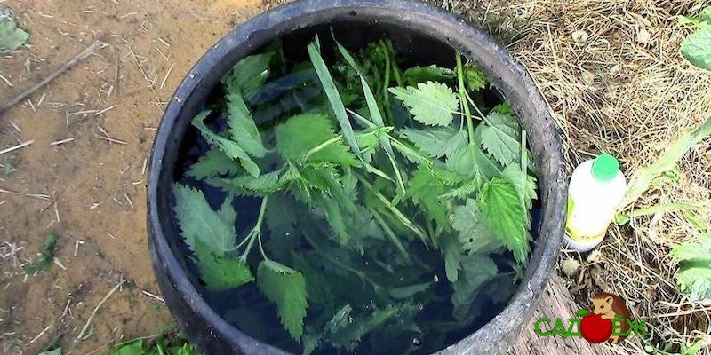 Как приготовить зеленое удобрение из травы и крапивы?