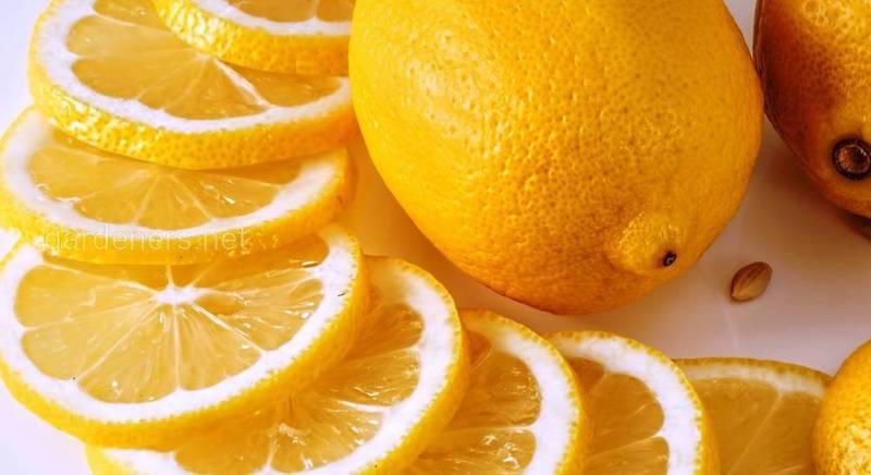 Лимон для отбеливания рук