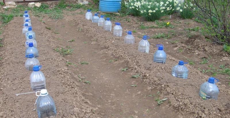 Мини-теплицы из пластиковых бутылок