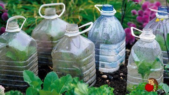 Использование пластиковых бутылок в огороде