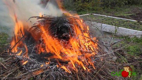 Можно ли сжигать мусор на участке