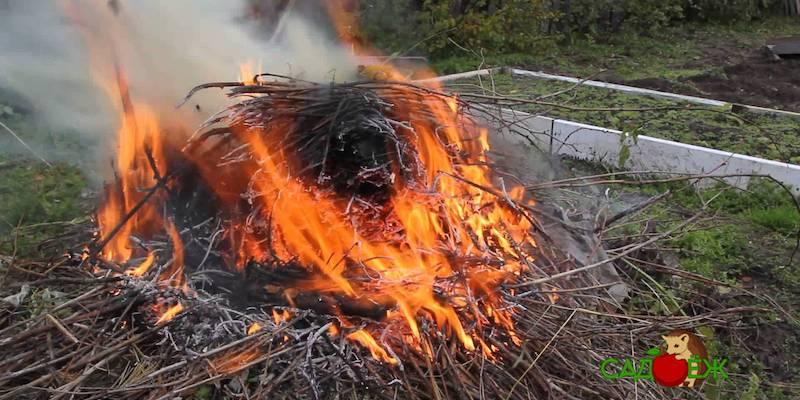 Можно ли сжигать мусор на участке и как это делать?