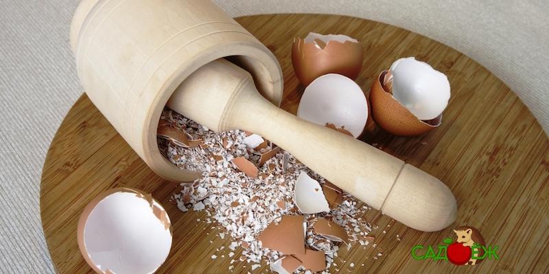 Как применять яичную скорлупу для капусты в огороде?