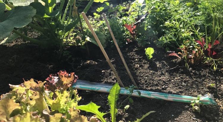 Бамбуковые палочки для рыхления почвы в огороде