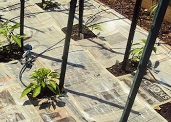 Полезное применение газет в огороде