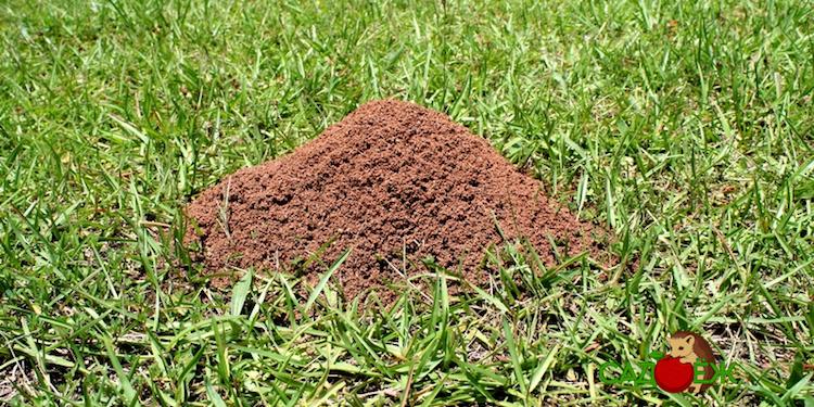 Как избавиться от муравейника на дачном участке?