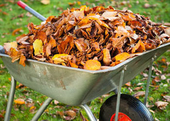 Полезное применение опавшей листвы в огороде